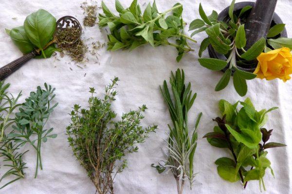 plantes de chance