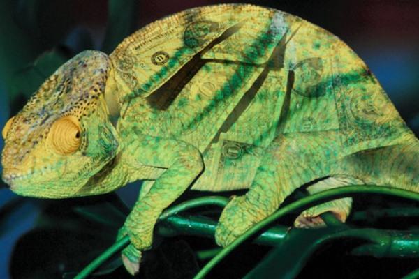 Recette magique sécrète avec le caméléon pour attirer l\u0027ARGENT et LA CHANCE